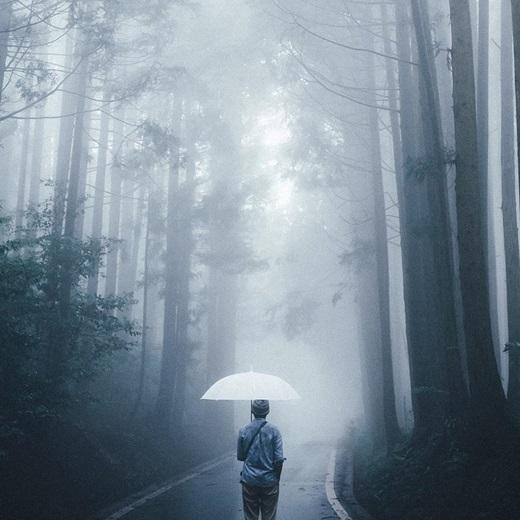 Sương mờ giăng lối, có bóng ai lặng lẽ giữa trời... (Nguồn: Bored Panda)