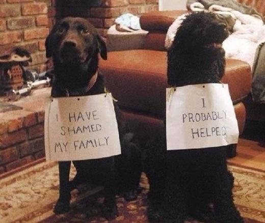 """Bên trái: """"Con đã làm cả nhà mình phiền lòng."""" Bên phải: """"Còn con giúp nó làm điều đó đó."""" (Nguồn: 9gag)"""