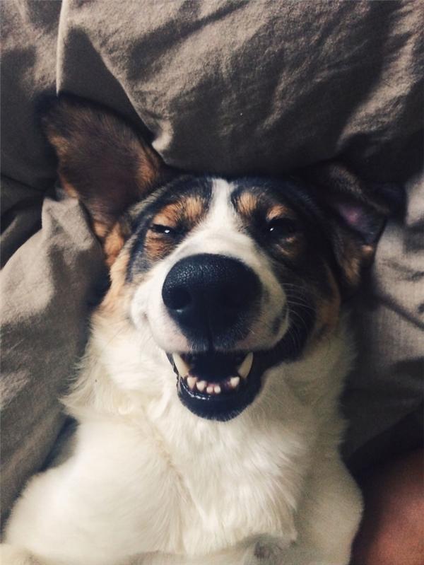 Cười bò lăn với những chú chó hạnh phúc nhất thế giới