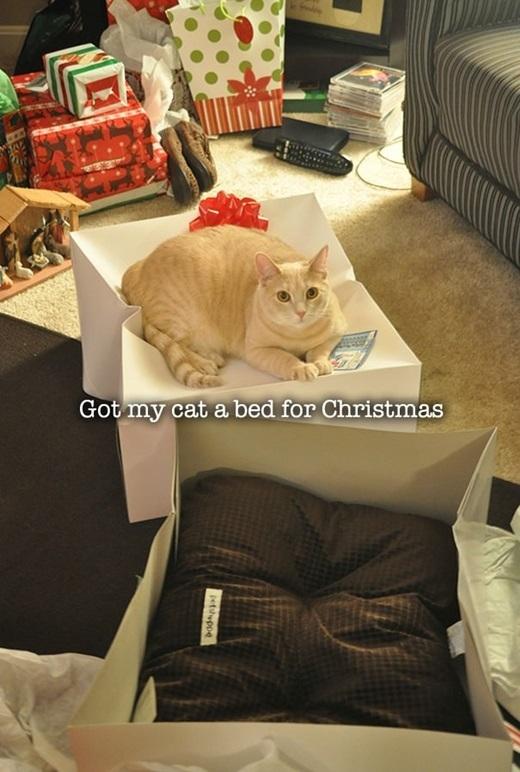 Được rồi, quà Giáng Sinh năm sau của chú em xác địnhlà một cái hộp đựng quà mới tinh nhé.(Nguồn: 9gag)
