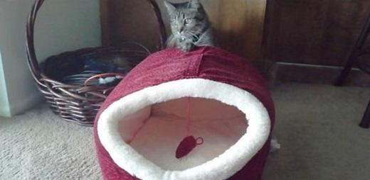 """""""Đây là mẫu giường mới nhất dành cho mèo...""""(Nguồn: 9gag)"""