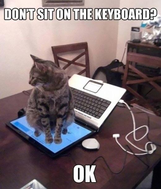 """""""OK, miễn anh không ngồi trên bàn phía của chú là được chứ gì?""""(Nguồn: 9gag)"""