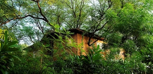Nơi đây có những ngôi nhà cây hạng sang với máy điều hòa, wifi và TV để du khách luôn cảm thấy dễ chịu dù ởsâu trong rừng.(Nguồn: Internet)