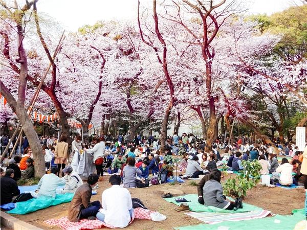 4 luật lệ lạ lùng nhất chỉ có ở Nhật Bản
