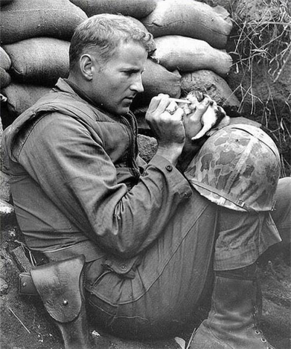 Một người lính cho chú mèo con 2 tuần tuổi ăntrong Chiến tranh Triều Tiên.