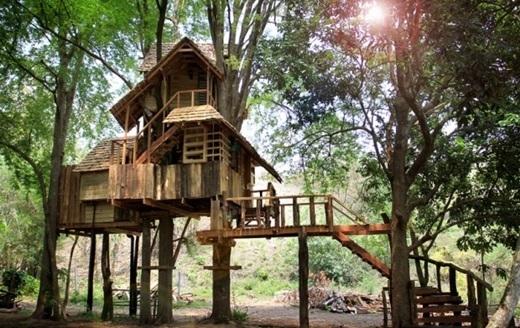 Nhà cây Rabeang Pasak tọa lạc ở tỉnh Chiang Mai, Thái Lan. (Nguồn: Internet)