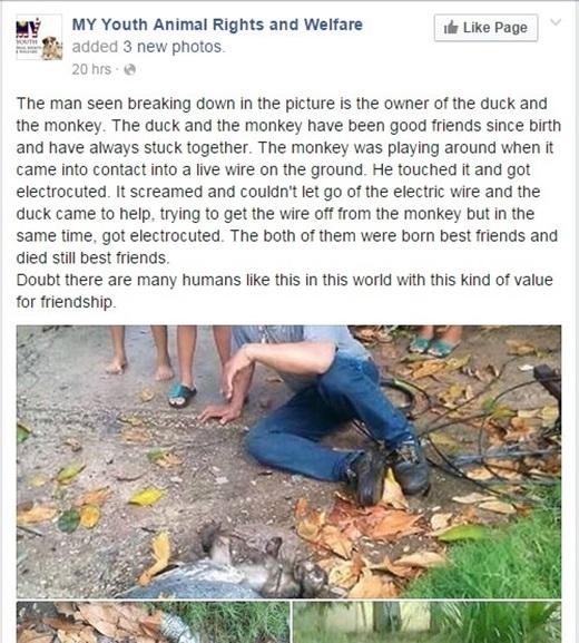 Câu chuyện về đôi bạn khỉ và ngỗng được đăng tải trên một trang mạng xã hội ở Malaysia. (Ảnh chụp màn hình)