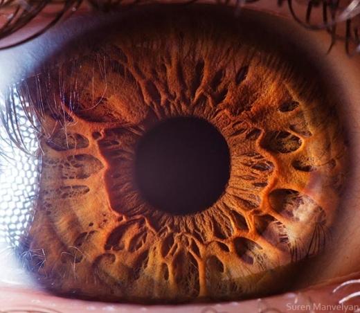 """Ngạc nhiên trước sự phức tạp của """"cửa sổ tâm hồn"""" khi nhìn cận cảnh"""