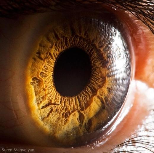 Giác mạc là cấu trúc trong suốt nằm ở phía trước mắt giúp tập trung ánh sáng đi vào. (Ảnh: Suren Manvelyan)