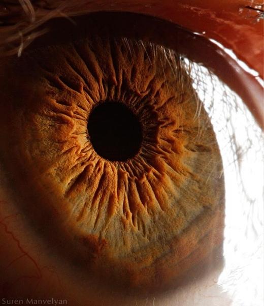 Cầu mắt có thể chuyển động nhờ vào sức kéo của 6 bắp thịt: 4 cơ trực - trên, dưới, ngoài, trong; 2 cơ chéo - trên và dưới. (Ảnh: Suren Manvelyan)
