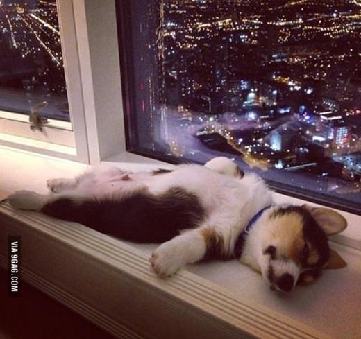 """Vừa ngủ vừa ngắm thành phố mới """"phê"""" làm sao. (Ảnh Internet)"""