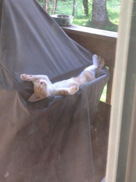 """""""Ngủ như vầy thoải mái hết chỗ chê"""".(Nguồn: viralnova.com)"""