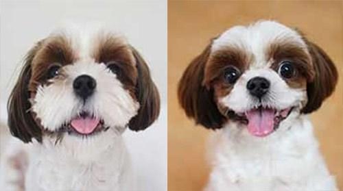 Một con chó được thu gọn hàm và tai:Pixable.
