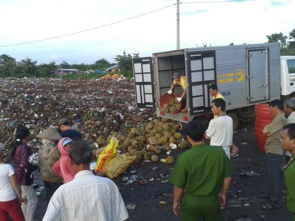 """Công an Đắk Lắk tiêu hủy một xe sầu riêng """"bẩn""""."""
