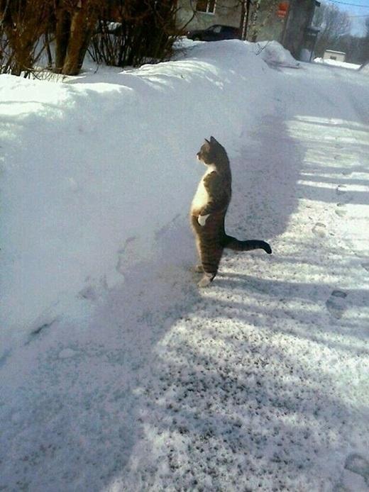 """""""Mới tuyết có một đêm mà đã choáng tầm nhìn của anh thế này..."""". (Nguồn: 9gag)"""