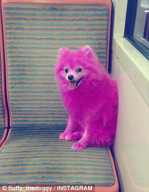 Mặc cho bị lên án, cô gái vẫn liên tục đăng tải ảnh chú chó màu hồng. (Ảnh: Instagram)