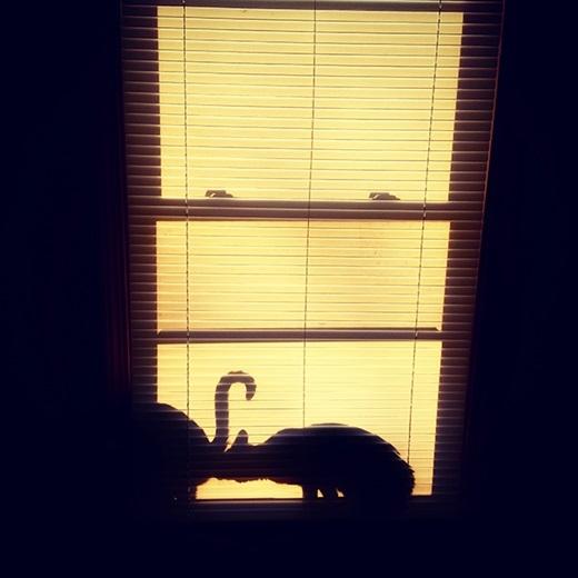 Có hai con mèo bên cửa sổ...(Nguồn: 9gag)