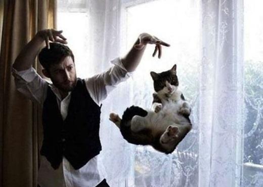 Úm ba la ra con mèo béo.(Nguồn: 9gag)