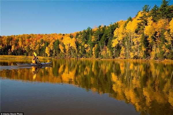 Hàng cây ở đảo Prince Edward soi bóng dưới dòng sông Bonshaw, Canada.