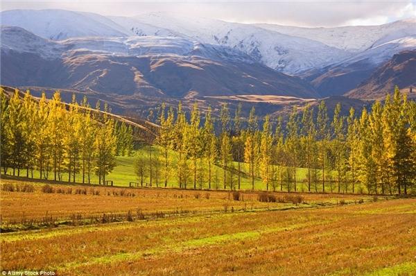 Bức tranh xinh đẹp ở Queenstown, New Zealand vào mùa thu.