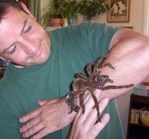 ... và một con nhện đen Nam Âu với sải chân lên đến 30cm.