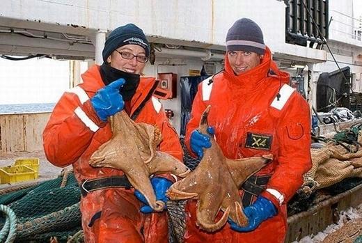 Loài sao biển Macroptychaster sở hữu cơ thể dài tới 60cm.