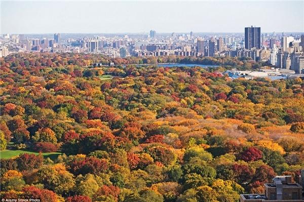 Mùa thu nhuộm công viên Central ở New York thành những mảng màu tuyệt đẹp.