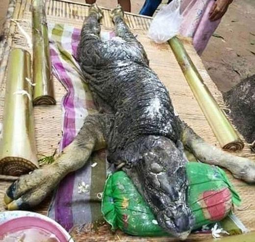 Con vật có phần đầu và thân khá giống cá sấu.(Ảnh: Internet)