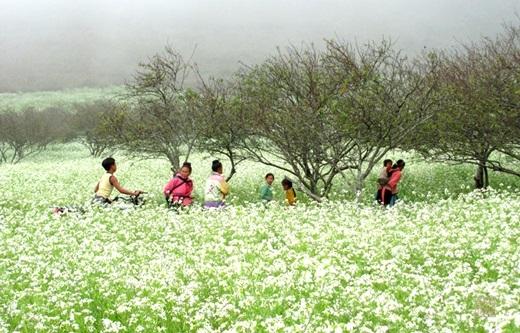 Người dân mộc mạc tô điểm cho cảnh sắc Mộc Châu mùa hoa cải.(Nguồn: Internet)