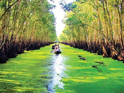 Cứ vào mùa nước nổi – độ tháng 10, 11, là rừng tràm thuộc khu du lịch sinh thái Trà Sư lại làm say lòng người bởi chiếc áo xanh mướt mát, tươi non đến ngất ngây.(Nguồn: Internet)