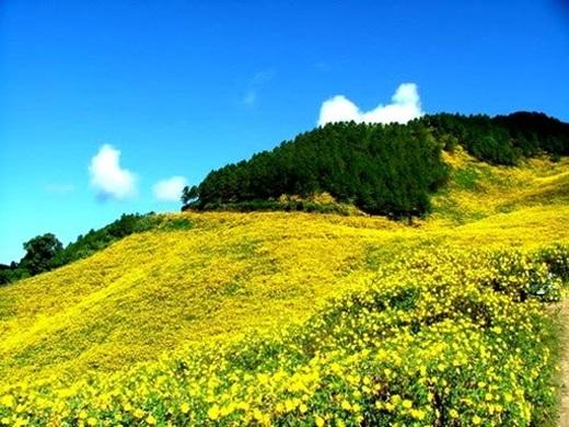 Mùa hoa dã quỳ là một nhân tố níu chân du khách đến Đà Lạt vào mùa đông.(Nguồn: Internet)