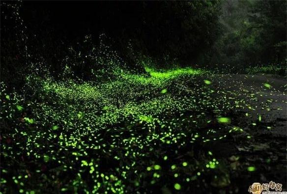 Công viên độc đáo này được đặt tại thành phố Vũ Hán, tỉnh Hồ Bắc, Trung Quốc. Ở đây có khoảng 10.000 con đom đóm, được chia thành nhiều khu khác nhau, như khu đom đóm bay tự do, khu tiếp xúc trực tiếp...