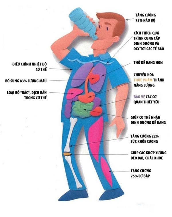Nước tác động đến cơ thể bạn như thế nào?