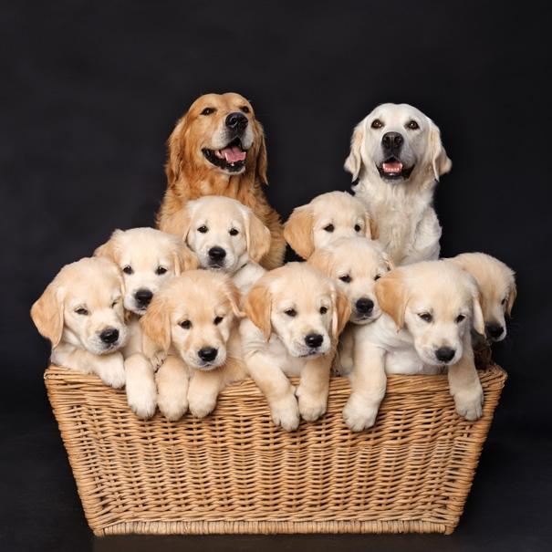 """9 """"tiểu yêu"""" và bố mẹ nhà cúnnày có làm cho các bạn muốn khuân hếtvề nhà nuôi không?"""