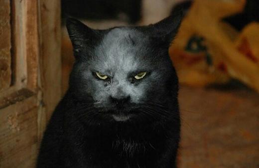 Buổi tối mà thấy chú mèo này chắc đứng tim chết quá. Đi chơi Halloween được rồi đó!(Nguồn: Internet)