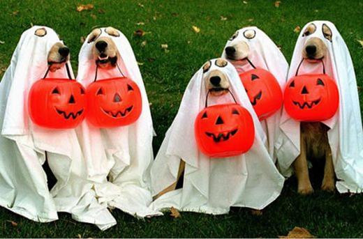 Biệt đội ma trơi đi xin kẹo đêm Halloween.(Nguồn: Internet)