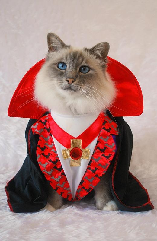"""Ma cà rồng Dracula """"đáng sợ"""" trong truyền thuyết đã xuất hiện.(Nguồn: Internet)"""