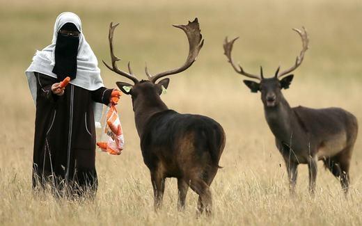 Một phụ nữ đang cho con hươu sừng tấm ăn cà rốt tạiPhoenix Park, Dublin. (Ảnh: Niall Carson)