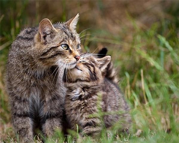 """""""Con yêu mẹ nhiều lắm ạ!""""(Ảnh Internet)"""