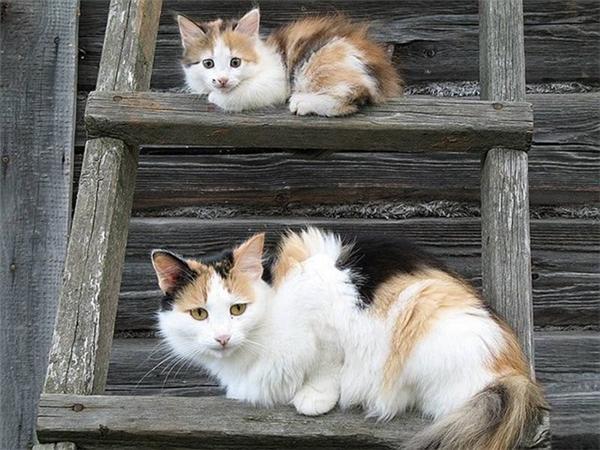 Động vật cũng giống con người, chúng hạnh phúc và bình yên nhất khi bên cạnh người thân, vànhận được sự thương yêu và chăm sóc.(Ảnh Internet)