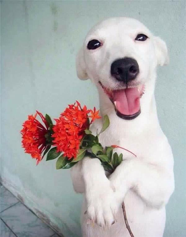 Hình ảnh chú chó tạo dáng bá đạo gây sốt cư dân mạng