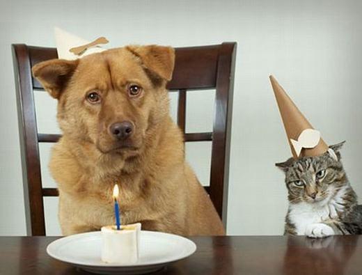 """Mèo: """"Sinh nhật cả hai mà làm như chỉ sinh nhật nó!"""". (Ảnh: Internet)"""