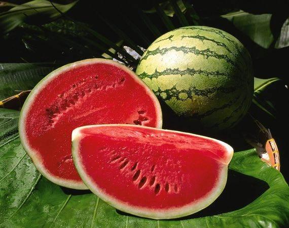 Điểm danh những loại rau quả miễn nhiễm với thuốc trừ sâu