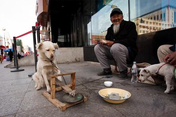 """Gần đây người ta bắt gặp một ông lão hay đi ăn xin tại thành phố Trường Xuân, tỉnh Cát Lâm, Trung Quốc. Đặc biệt, đồng hành cùng ông là chú chó cưngcó khả năng chơi """"cồng chiêng""""."""