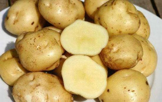 Khoai tây và những điều cần tránh để bảo vệ sức khỏe