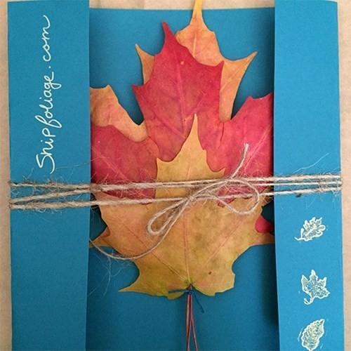 Mỗi gói sản phẩm do Kyle cung cấp sẽ gồm 3 chiếc lá cây với 3 màu khác nhau là vàng - đỏ - xanh hoặc tùy chọn.