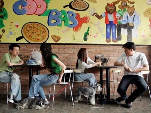 Nhà hàng đặc biệt dành cho chó có tên Coolbaby ở Bắc Kinh, Trung Quốc. Các món ăn ở đây được chế biến cho từng giống chó, từng độ tuổi và kích cỡ một cách khoa học.