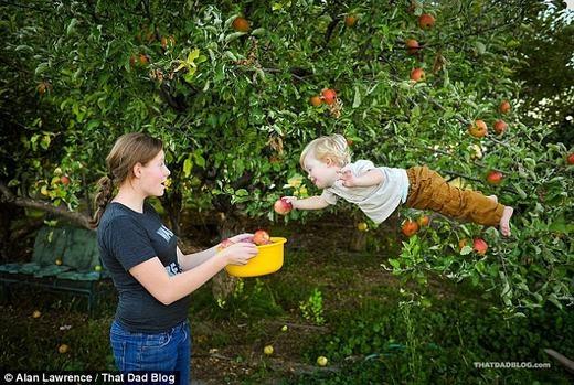 """""""Thiên thần""""cũng có thể giúp mẹ hái táo..."""