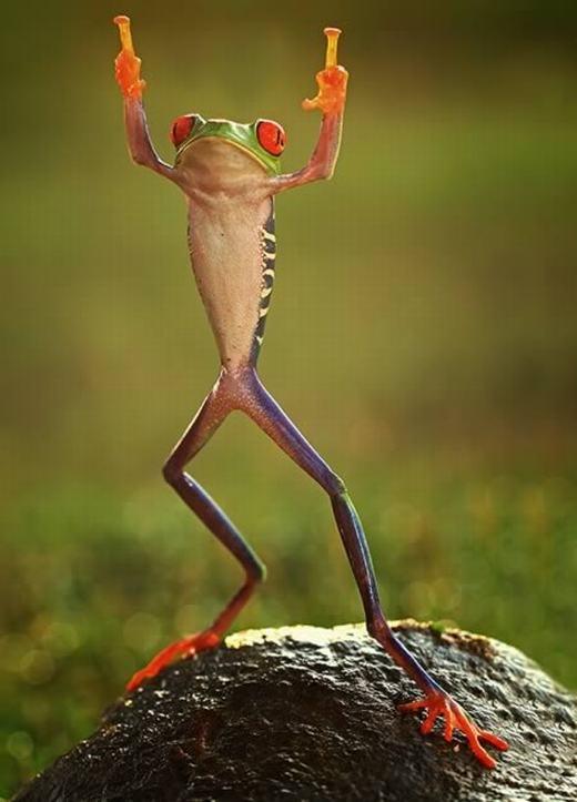 """""""Khoảnh khắc nghệ sĩ"""" của một chú ếch. Ảnh được chụp bởi nhiếp ảnh gia Shikhei Goh tại Indonesia."""