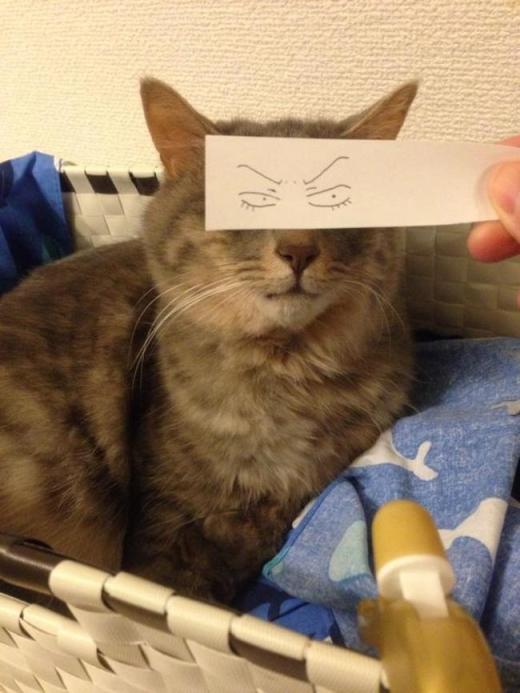 """""""Đang ngắm cô mèo kế bên mà cậu chủ làm gì che mắt mình vậy nhỉ?"""".(Ảnh: Internet)"""